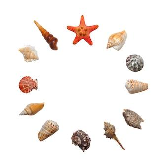 라운드 구성 또는 흰색 배경, 평면도, 시계 다이얼 개념에 고립 된 다른 유형의 바다 조개와 불가사리의 12 요소로 설정