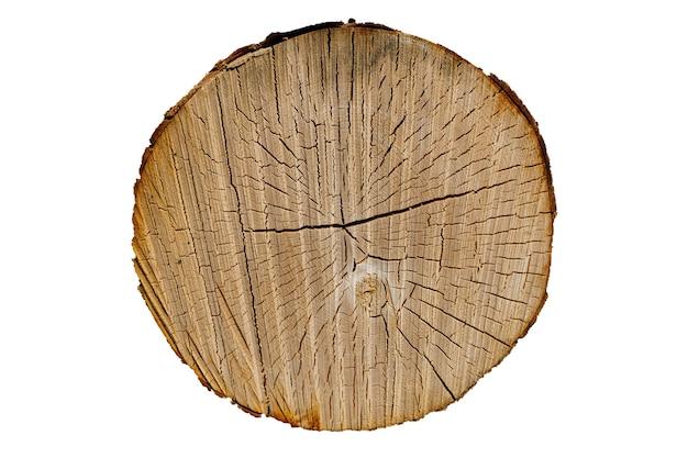 白い背景で隔離のラウンドカットツリー。ひびの入った白樺の幹。木の質感。高品質の写真