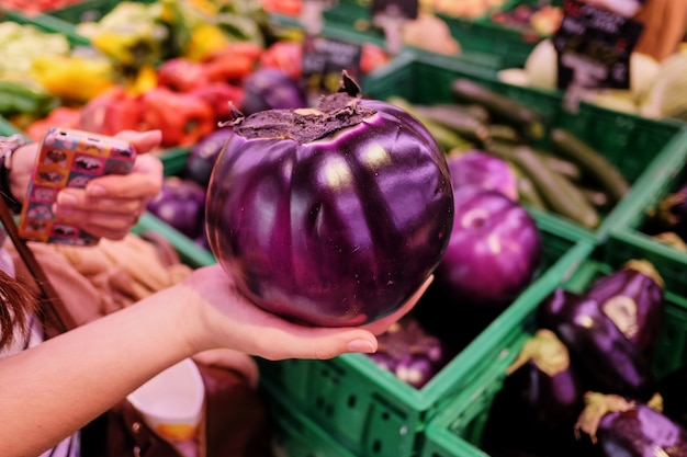 Round eggplant in farm hands against the backdrop of a rustic stone wall. ecological products