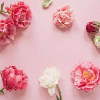 Круглая рамка из красивых розовых и белых цветов пионовидного тюльпана на розовом. плоская планировка, вид сверху