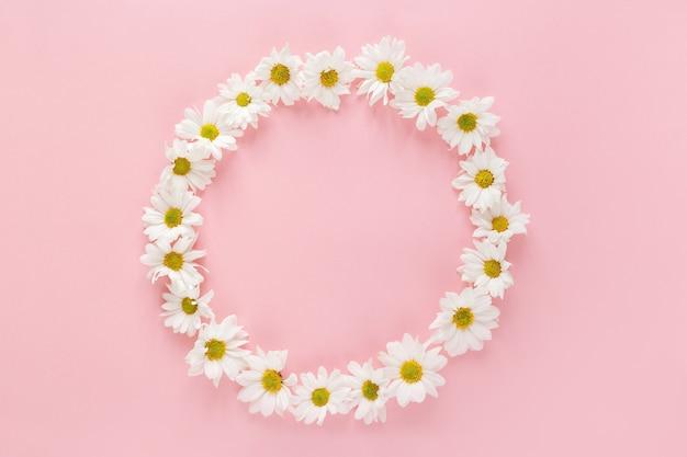 분홍색 배경에 흰색 데이지 꽃 봉 오리로 만든 라운드 프레임. 평면 평신도, 평면도. 봄 블로그 개념