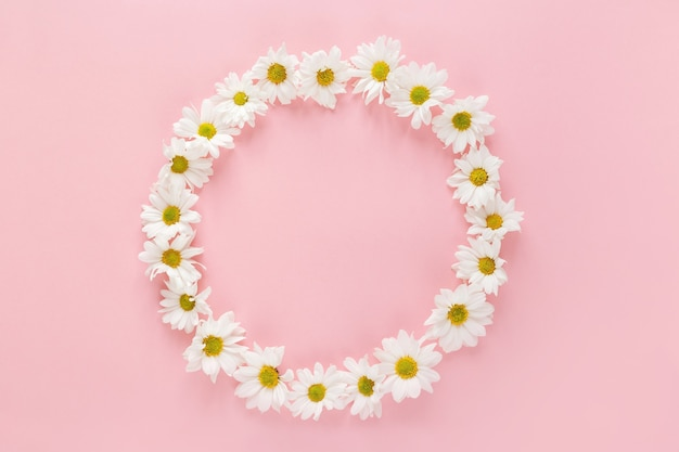 Round frame made of white daisy flowers buds on pink background. flat lay, top view. spring blog concept