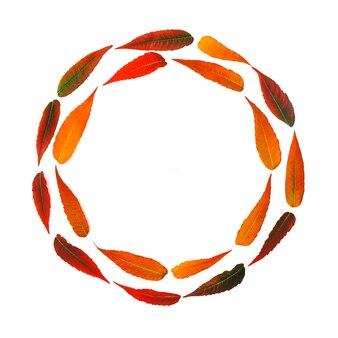 Круглая рамка из ярких осенних листьев на белом фоне с копией пространства
