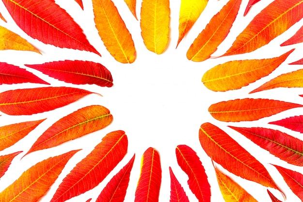 コピースペース、フラットの平面図と白い背景に明るい秋の丸いフレームの葉します。