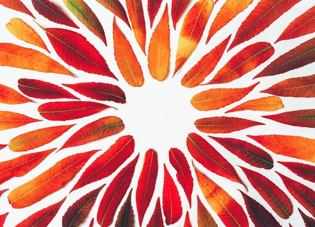 밝은 가을의 라운드 프레임 복사 공간, 평면 누워의 상위 뷰 흰색 배경에 나뭇잎