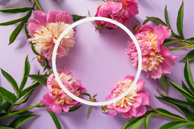 Round frame. pink peonies on purple background