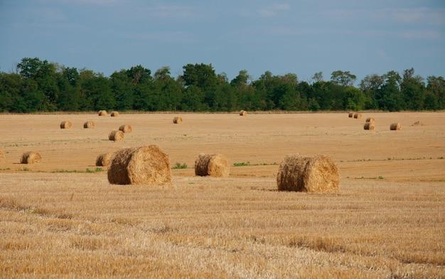 Круглые снопы сена на летнем поле, на фоне леса и голубого неба.