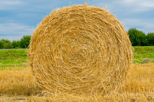 Round stacks of straw in the field.