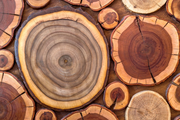 Round wooden unpainted solid natural ecological soft colored brown and yellow crackled stumps, tree cut sections with annual rings different sizes and forms background
