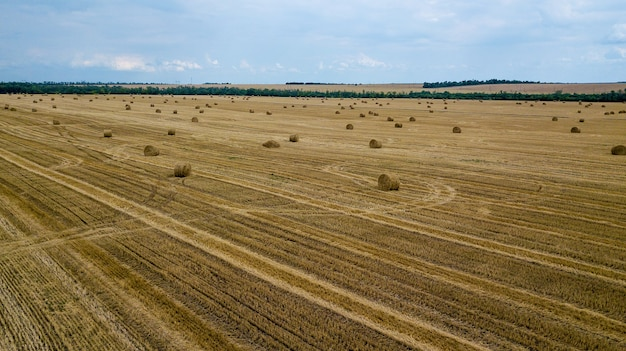 Round yellow haystacks are scattered in a chaotic manner on the field