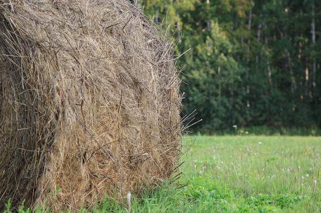フィールドで新鮮な収穫の干し草のround