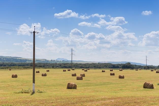 牧草地の丸いround