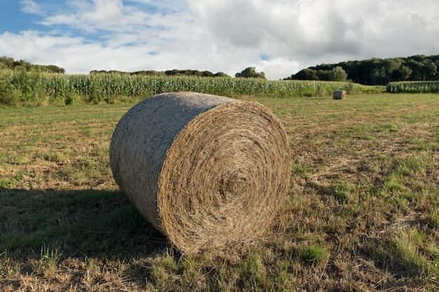 農業分野で収穫された干し草のround