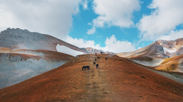 A route through mountain peaks and hills through majestic landscapes with horses in the distance.