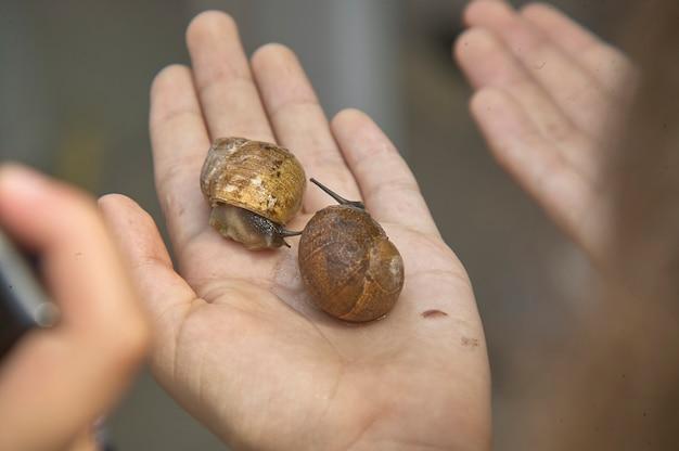Rovigo, italy 19 february 2020: handful of snails