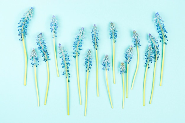 Row of blue mascara flowers on colored background