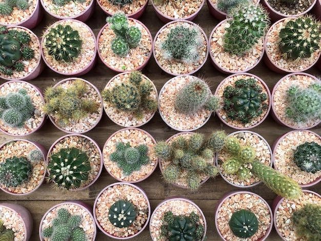 Row of cactus plants in flower shop