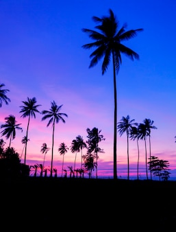 Row of coconut palm trees with beautiful dramatic sky sunset or sunrise over the tropical sea scenery of beautiful nature background in phuket thailand