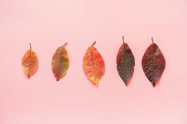 Row of colorful autumn leaves. minimal style. top view, flat lay. autumn concept