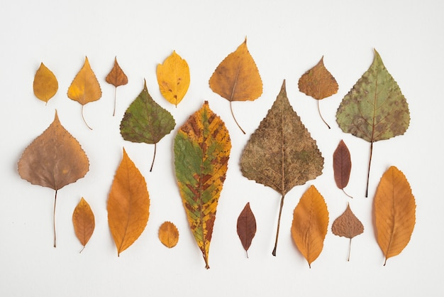 Row composition with multicolored autumn leaves