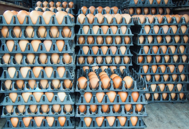 Row of eggs in eggs tray