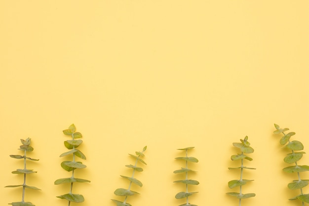 Row of eucalyptus leaves twig over yellow surface