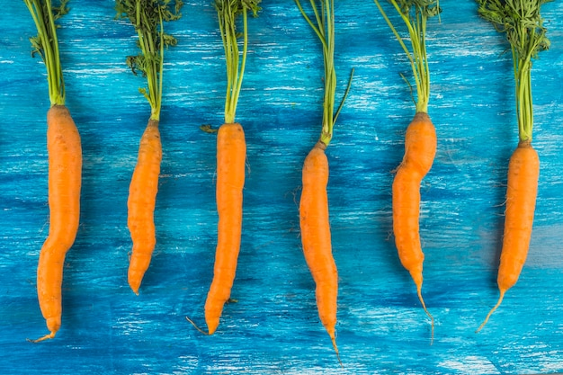 Row of fresh carrots on blue wooden background