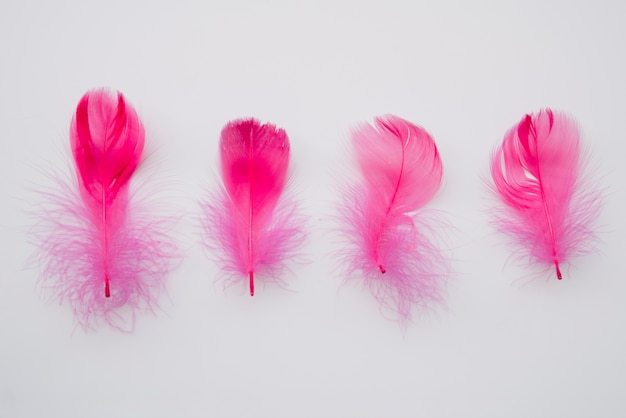 Row of gentle pink feathers