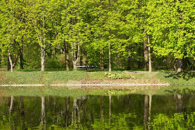 Row of green trees reflecting in water