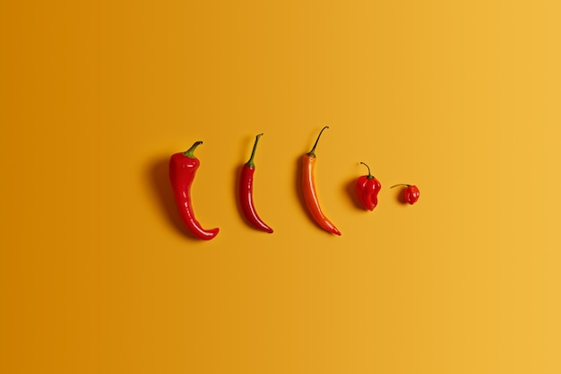 Row hot red chilli pepper of different size and shape on yellow background. kinds of hot pepper. spicy food concept. several cayennes. nobody on photo. healthy vegetables for preparing salad