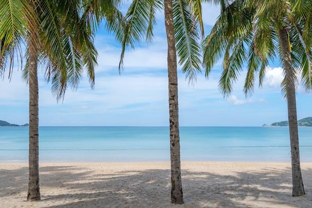 해변에서 코코넛 야 자 나무의 행 배경 또는 벽지에 대 한 이국적인 열 대 해변 풍경입니다.