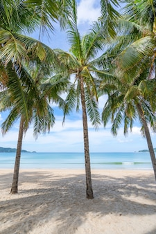 ビーチのココナッツ椰子の木の列背景や壁紙のエキゾチックな熱帯のビーチの風景。