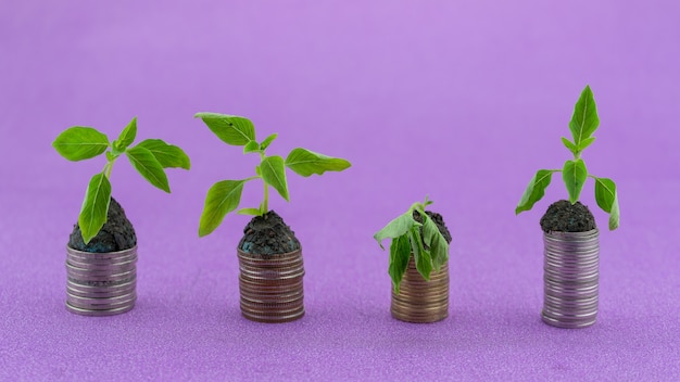 Ряд монет с зеленым растением, увядающим и оживающим растение, растущее на деньгах, монеты business gr