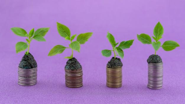 녹색 식물 시들고 생명에 솟구치는 동전의 행 돈 동전에 성장 하는 식물 비즈니스 성장 투자 개념입니다.