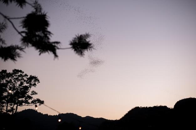 夕焼け空を背景に飛んでいるコウモリのコロニーの列