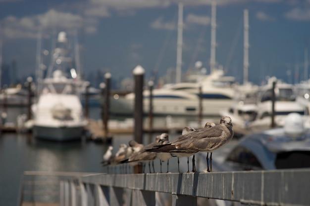 Ряд чаек, стоящих на парапете фронта с изолированным размытым фоном лодок стыковки в порту.