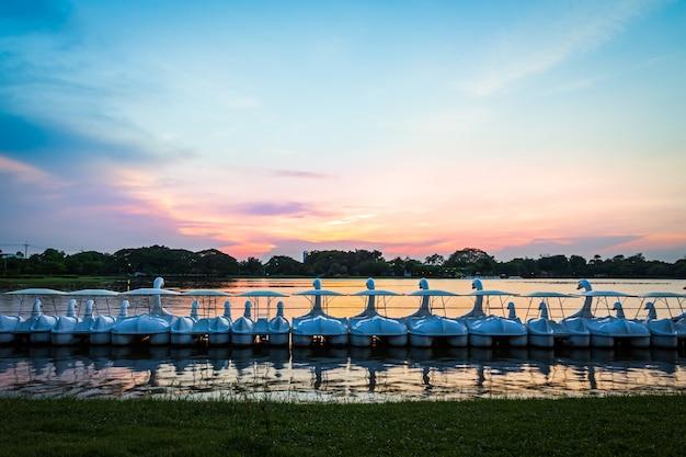Ряд белых лебедей вращаются водные велосипеды на воде в озере общественного парка в период заката, сумерки