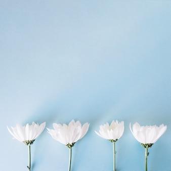 Ряд белых нежных цветов