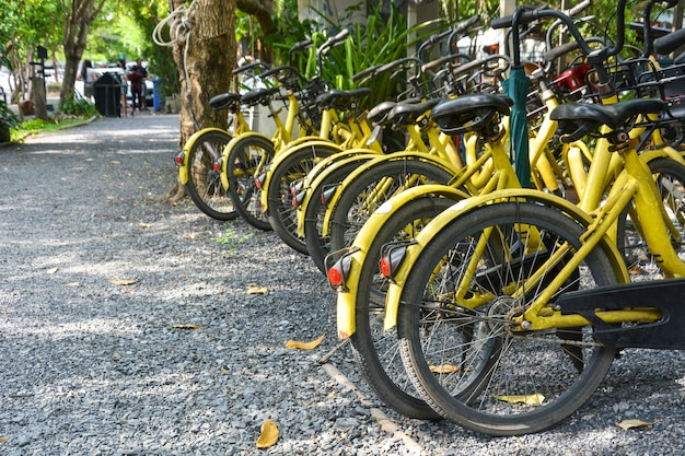 Ряд желтых общественных велосипедов в аренду, парковка на пешеходной дорожке в общественном парке