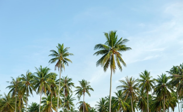 Row of palm trees in tropical island with clear blue sky scenery background