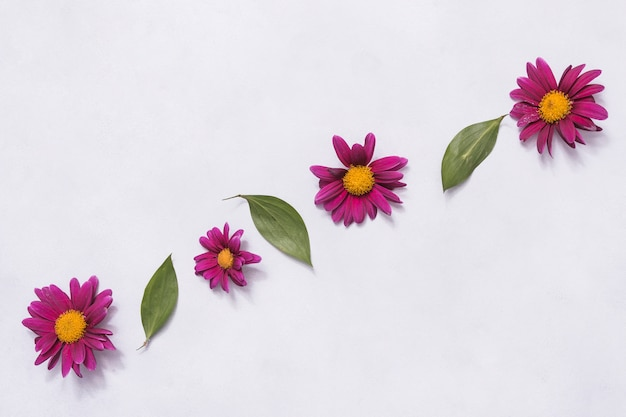 Row of pink flowers and green leaves