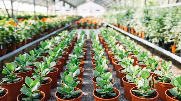 Row of potted seedling in greenhouse