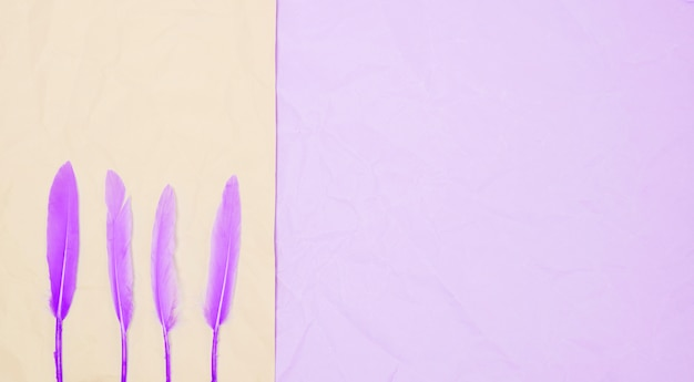 Row of purple feather on dual background