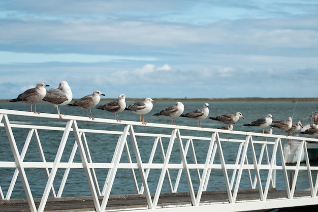 Row of seagulls
