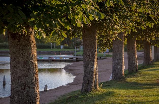 Row of trees next to lake