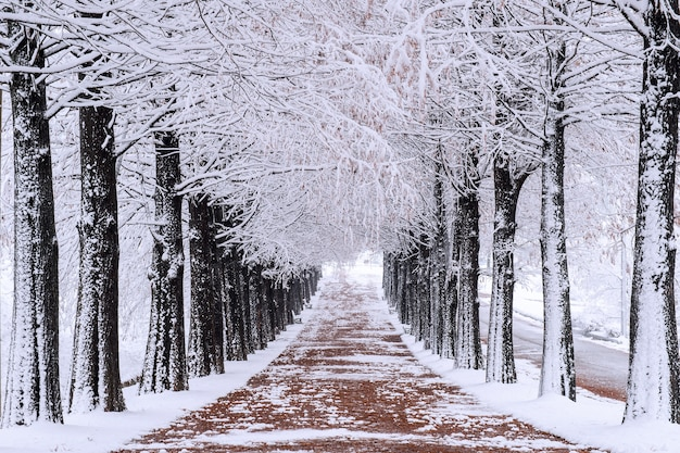 Row of trees in winter with falling snow