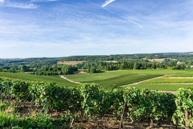 Рядный виноград винограда в виноградниках шампанского на горе реймс, реймс, франция