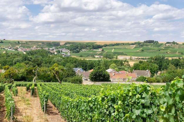 Рядный виноград винограда в виноградниках шампанского