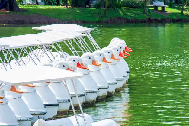 Row of white duck paddle boat in the reservoir.