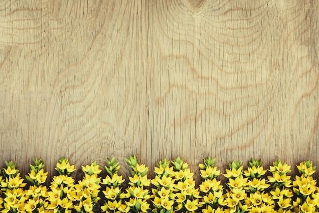 Row of yellow field flowers on wood